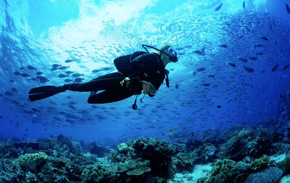 Buceo responsable - muybuceo